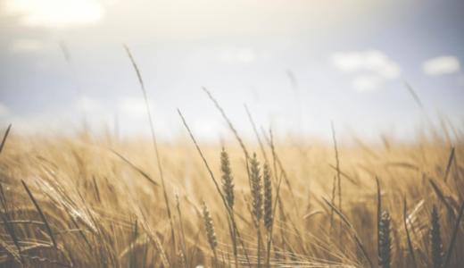 今熱いのはテクノロジー×農業。最先端は第一次産業にもある。